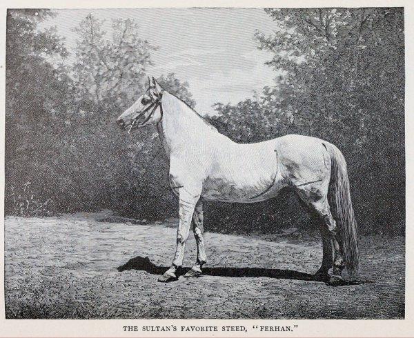 Abdülhamid'in ayrılamadığı atı: Ferhan #1