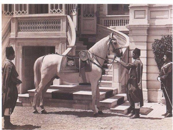 Abdülhamid'in ayrılamadığı atı: Ferhan #4